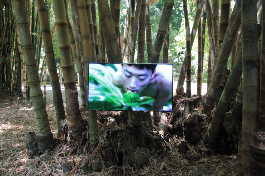 Zheng Bo, Pteridophilia 1, 2016 – fortlaufend. Video, 17:14 min. Foto: Wolfgang Träger, Photo Courtesy: Manifesta 12 Palermo and the artist