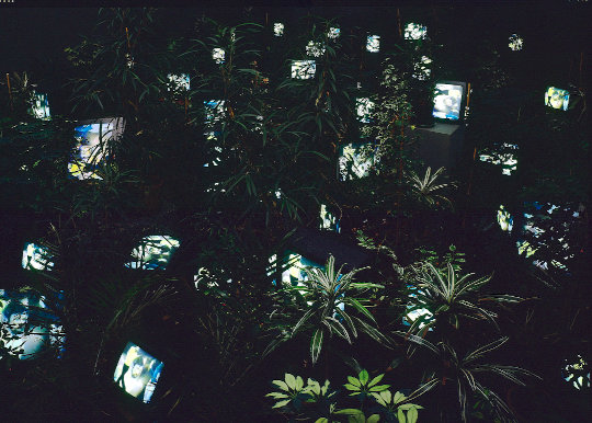 Nam June Paik, TV Garden, 1974-1977 (2002). Kunstsammlung Nordrhein-Westfalen, Düsseldorf © Estate of Nam June Paik